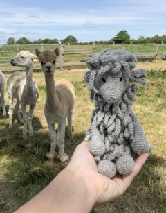 Simone the Suri Alpaca